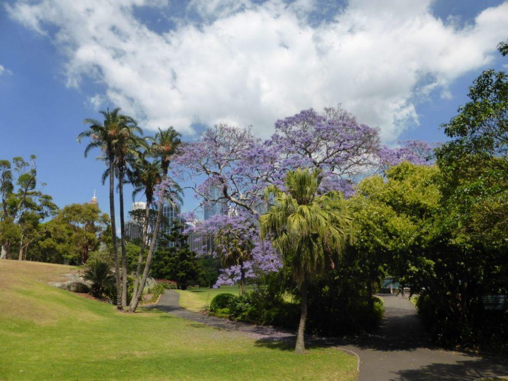 Hardlopen in Sydney - langs historie en hoogtepunten - Botanical Gardens