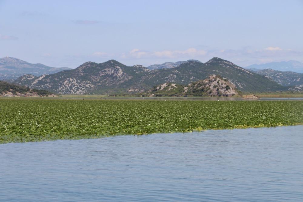 Hardlopen naar het Skadarmeer-meer